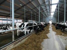 Maak kennis met IJsboerderij Bonestroo